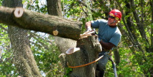 Rockford Tree Removal Service
